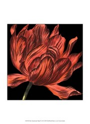Mini Transitional Tulip IV Poster Print by Vision studio (10 x 13)