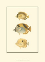 Antique Tropical Fish I Poster Print by Vision studio (10 x 13)
